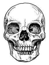 Vector black and white illustration of human skull…