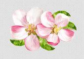 Schauen Sie sich die Apfelbaumblüte von LiliGraphie auf dem Kreativmarkt an …   – Apfel
