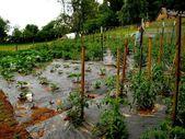 Gärtnern zu Händen Grünschnabel 11 Tipps zu Händen verdongeln erfolgreichen Start – Gärtnern