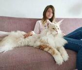 Das Bild kann Folgendes enthalten: sitzende Person, Katze und Interieur   – Katzen Bilder