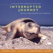 Interrupted Journey Saving Endangered Sea Turtles Kathryn Lasky Christopher G Knight 9780763628833 Amazon Com B Endangered Sea Turtles Endangered Turtle