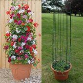 Incroyables idées de jardin vertical sur les plantes grimpantes dans des pots # Incroyable #