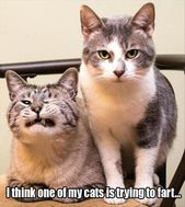 34 Funny Cat Pictures Because Caturday Is Almost Here –