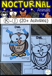Nocturnal Animal Unit for Kindergarten (20+) Centers, Crafts, Science and Writing Activities