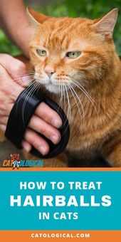 c184c4fcd57b99d5b34f4bb87b84b20a - How To Get Rid Of Matted Hair Clumps On Cats