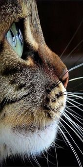 Beautiful face of a cat captured from the side #catface #catwhiskers #cateye #ca…  – Fotografische Themen