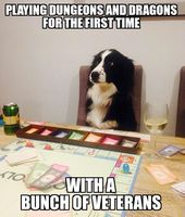 I Have No Idea What I M Doing Oh Rill The Dice Right Funny Animal Pictures Funny Dogs Collie