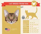 Pet cat infographic