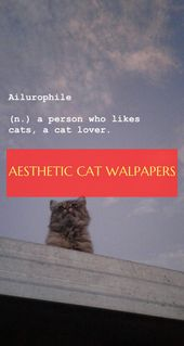 cat wallpapers ginger. cat wallpapers grumpy. cat walpapers anime – #galaxycatwalp …