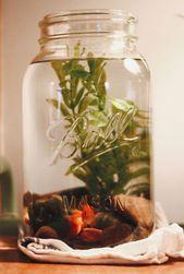 15 Awesome DIY Aquarium mit Einmachglas Ideen #aq…