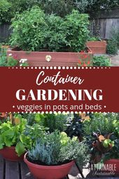 Rising greens in pots for inexperienced persons: Selecting the *proper containers for you…