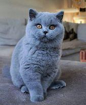 50 Cutest Kittens Make Our Lives Better Every Single Day Page 5 Of 53 Sevimli Kediler Sevimli Kedi Yavrulari Guzel Kediler