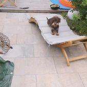 Ayuda al perro salchicha tiene sus 5 minutos   – Rauhaardackel Motive & Bilder