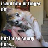 #catsmemes,#catsgifmemes, funny animal pictures, cat memes, #cats, #funnycatsjus…