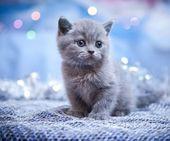 Zehn Katzen, die lieber auf dem Rücken schlafen   – Doro