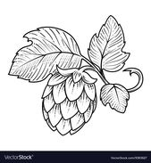 Stylish hop branch hand drawn vector illustration. Download a Free Preview or Hi… – Beer/Bar/Logos