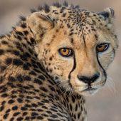 Wunderschöne Naturfotografie von National Geographic Fotograf Michael Melford