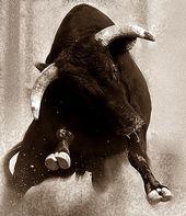 Toro : Spanish Bull anonimodelapiedra…