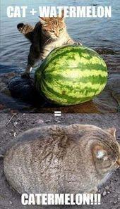 Cat Memes Of The Day 35 Pics – Ep27 #cats #catmemes #memes#lovelyanimalsworld – …