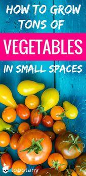 Tonnenweise Gemüse in kleinen Räumen anbauen Lobotanik   – DIY Best Bloggers {Home, Family, Garden}