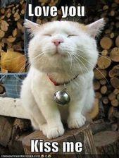 Toca dos veces esta foto para unirte al palacio del gato I de Collin. Un grupo de gatos de todo …   – Katzen