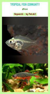 Tropical Fish Community Tropical Community Tropische Fischgemeinschaft Communaute Poissons Trop In 2020 Tropical Fish Aquarium Tropical Fish Tanks Fish Drawings