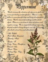 Menthe poivrée. Ceci est une page que j'ai faite pour mon livre des ombres dans le cadre du Herb Gri …   – Herbal Grimoire
