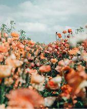 Such a beautiful floral depth of field photo by KYA Swim (KYA Swim). – #beautifu…
