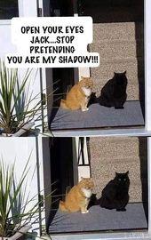 Hör auf, so zu tun, als wäre ich meine Schattenkatze