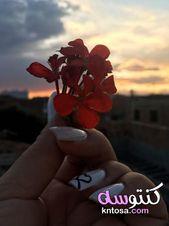 صور ورود رومانسية جديدة 2020 صور زهور وباقات ورد احلى صور ورود صور ورد مع بنات