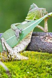 Diese lustigen Tierfotos wurden im perfekten Moment aufgenommen. #tiere #tier …