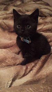 Schützen Sie schwarze Katzen dieses Halloween-Tier-Blogs