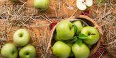 Smoothie de maçã verde pode acelerar o metabolismo e ajudar a perder peso; Verificação de saída…   – Achados