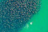 30 increíbles fotos de migración animal   – ANIMALS