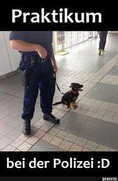 Praktikum bei der Polizei. | Lustige Bilder, Sprüche, Witze, echt witzig   – Süße Tiere♥