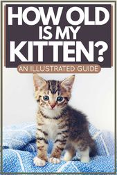 How Old Is My Kitten An Illustrated Guide Cat Articles In 2020 Cat Training Kitten Kitten Care