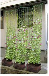 Petunienblütenreben klettern #Blumenreben #aufsteigen #petunia