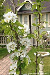 Pin By Nini S Higgledy Piggledy On Seasons Spring White