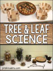 Tree & Leaf Science Activities, Tree Life Cycle for Preschool, Pre-K