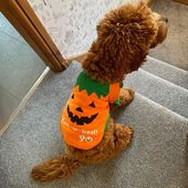When mums in charge of costumes and she buys me one too small.. Was a jumper is … – Puppy 2019