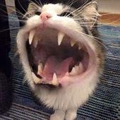 TOP 52 lustige Katzen und Kätzchen Bilder