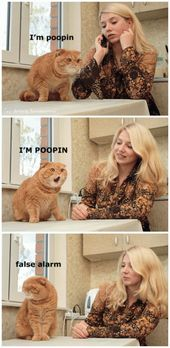 I dont even like cats but this is still funny!
