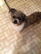 Pin By Lost Dogs Georgia On Dogs Found In Georgia Dogs Shih Tzu