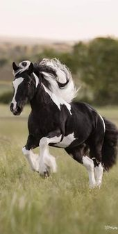 This beautiful animals is one of the most gorgeous horses I've seen. Great photography. – #louloubanana lolistere