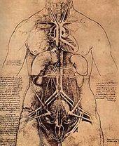 Vascular Surgery Wikipedia The Free Encyclopedia Leonardo Da