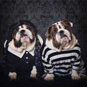 """#Bulldog Pics Instagram on Instagram: """"Happy Bulloween 🎃👻👿🤡 …   – English Bulldog"""
