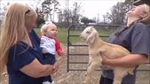 It is so funny 😂😂 #goats #animal #baby #funny #goat #pet #cute #animals #pets goats, animal, baby