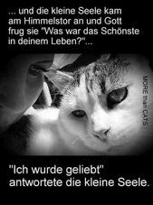 Photo of * fragte # lustige Tiere   Comedy Shop * fragte # lustiger-tiere – #fragte #lus …
