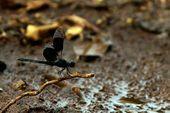 Artrópodos Del perfil de Preserve Planet en FB.   – Animales