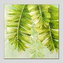 楽天市場 今だけ 送料無料 アートパネル 自然 風景画1枚で1セット グリーン リーフ バナナ 葉っぱ プレゼント 納期 お取り寄せ2 3週間前後で発送予定 ベッドソファならラッキードンキー 葉っぱ アートパネル 風景画